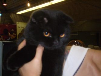 World cat show_Israel_pic7 by NyaFaker