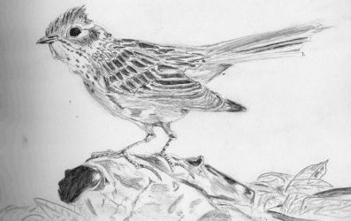 Sketch 1: Bird by Adam-Clowery