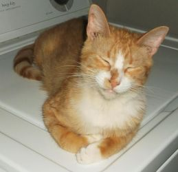 Scotty relaxing on the washer (4) by MystMoonstruck