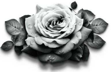 rose flower with dew (designed for a tattoo) by batard-tronik