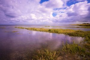 The Mudflat Side by Linkineos