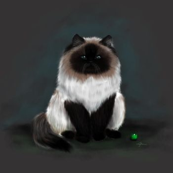 Himalayan blue cat by REDxBeast