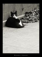 Cat i BW by Grasycho