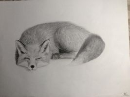 Sleepy Fox by EliasHUE