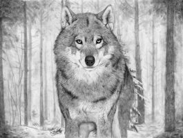 Wolf by abchurches