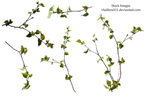 Branch spring tree PNG -3 by Vladlena111