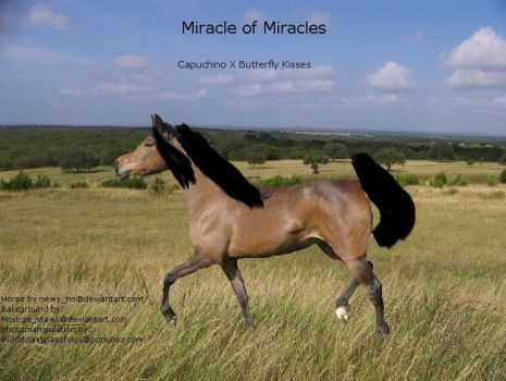 Miracle of Miracles by mgauvin