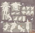 { Avridon Species Sheet: Remastered } by R0HI0