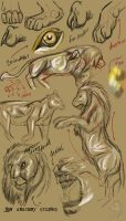 Lion anatomy studies by ghostwolfen