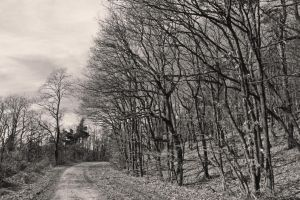 Dirt road by UdoChristmann