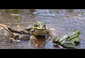 Frogs family by mysterious-one