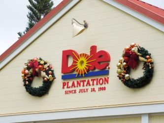 Dole Pineapple Plantation by WriterOfWolves