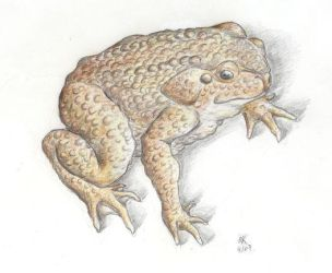 Cane Toad by CheshireCat8D