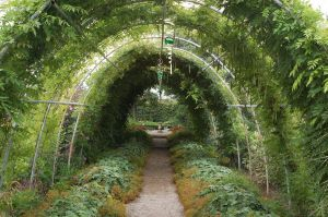 Green tunnel 01 by ant99