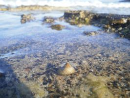 Shell in a Tide by lpevris