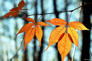 En Transparence d'Automne I by hyneige