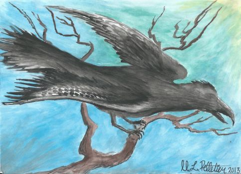 Young Crow by sticksnstones89