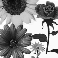 Brush Set: Flowers by miaka-stock