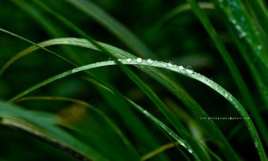 The Morning Dew by jith3d