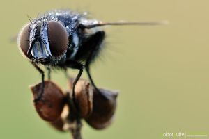 The Fly by Stefano-Coltelli