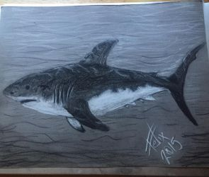 Great white sketch by theFATpirate