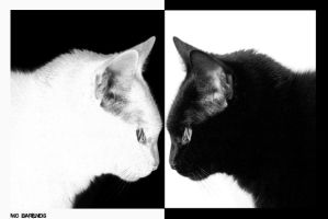 black cat, white cat by Mo6