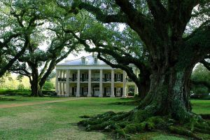 the oaks' house by 3thehardway