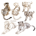 Tiger sketches by oxpecker