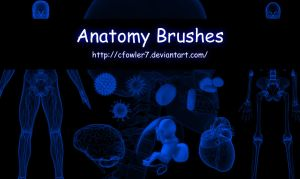PS Brushes - Anatomy by cfowler7-SFM