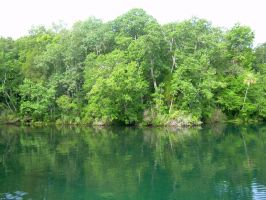 Homosassa River by evilpokejuggalette