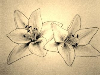 Lily Sketch for Tattoo Design by tksb1981