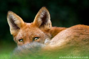 Bushy Tailed by Alannah-Hawker