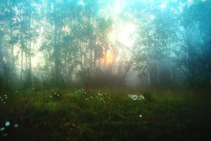 sunrise in forest by Parasenak