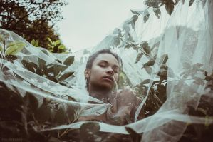 Wild Stories - Isabell 3 by Michela-Riva