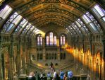 Natural History Museum by Airoy