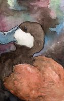 Ruddy Duck : Ripple Card by evanjensen