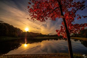 Sun Dogs and Sugar Maples by PurdueRifleman