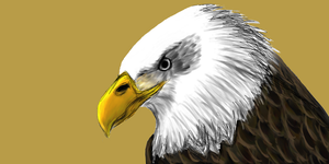 Bald Eagle Painting by yodaman293