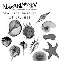 Sea Life Brushes by neverhurtno1