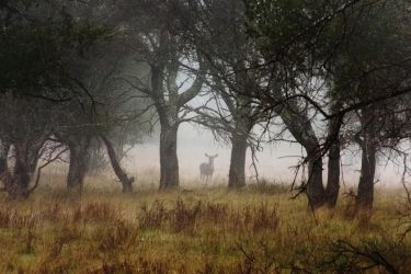 Deer in Forest by xelement