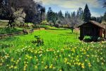 Color of the Spring I by esee