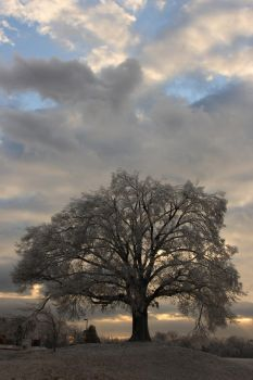 Iced Tree 2 by sydler