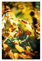 Autumn has come 6 by Dmitriyphoto