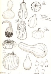 Sketchbook Page - Gourds by Anko6