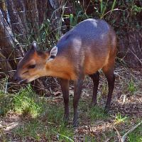 Little Antelope by Tephra76