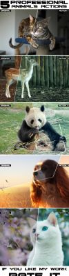 Animals Photoshop Actions by Grugle
