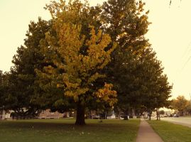 My Favorite Tree by JohnnyNiffer