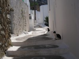 Greek Cats by IdanCarre