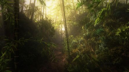 Bamboo deep in the jungle by Andywong75