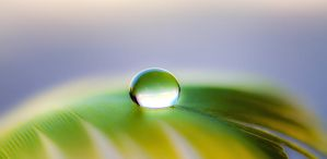 Droplet on yellow feather by WelshPixie